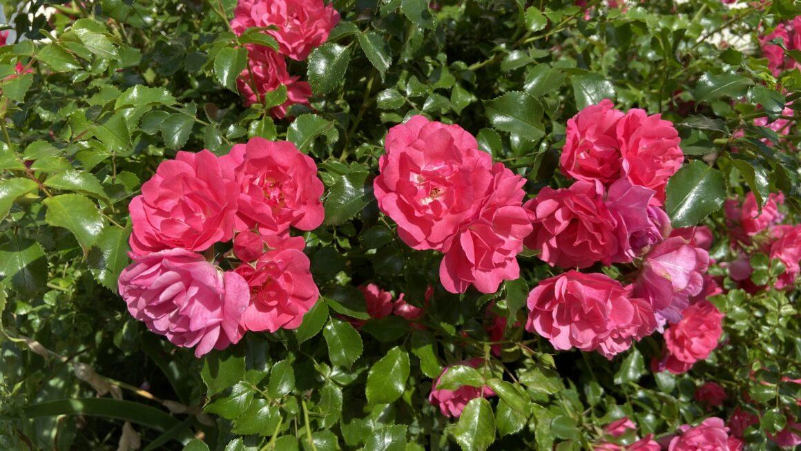 Recomendaciones de jardinería para mayo …